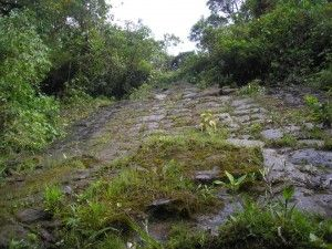 ORAS AL GIGANTILOR, DESCOPERIT IN JUNGLA DIN ECUADOR