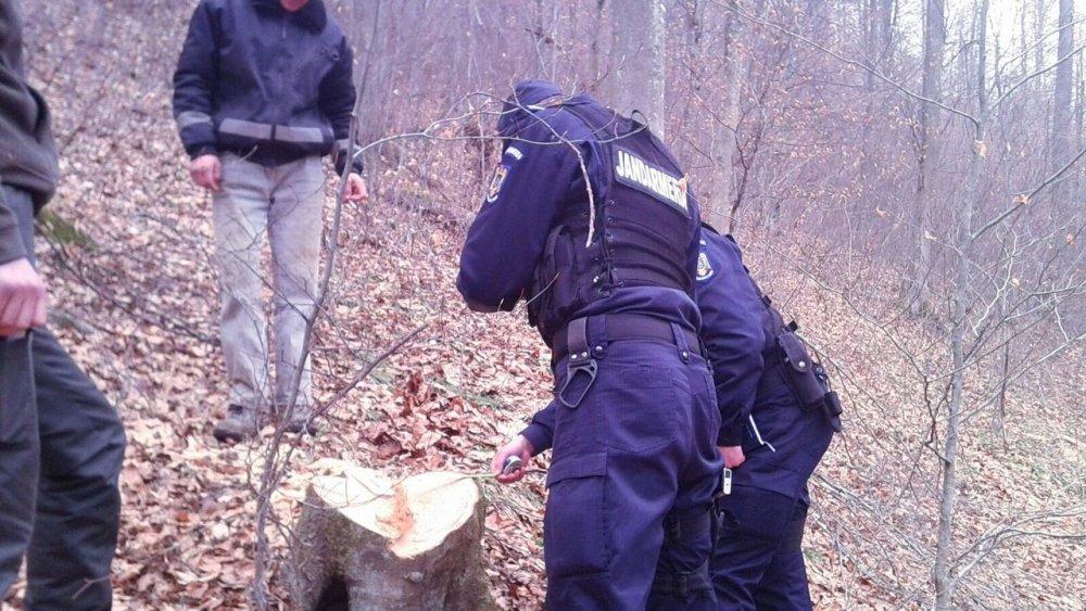 Un tânăr din Petriș este cercetat pentru tăiere ilegală de arbori