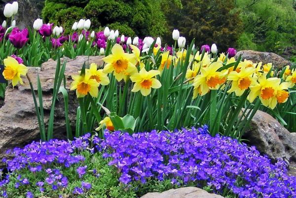 Florile de primăvară care te ajută să ai o grădină de vis