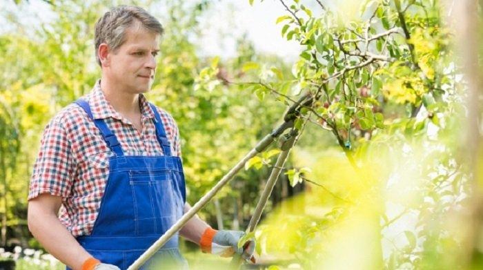 Cum îngrijim pomii fructiferi primăvara