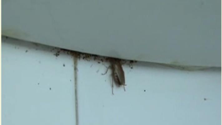 Secția de Pediatrie a Spitalului Județean Arad colcăie de gândaci