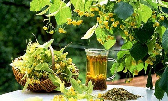Porția de sănătate din cana cu ceai de tei