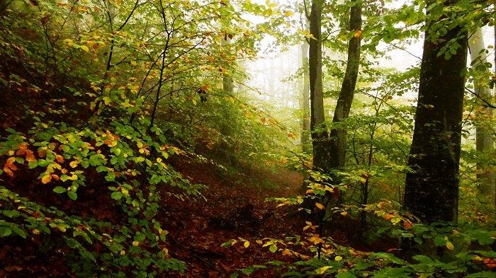 Suprafaţa de păduri virgine și cvasivirgine din România, în creștere
