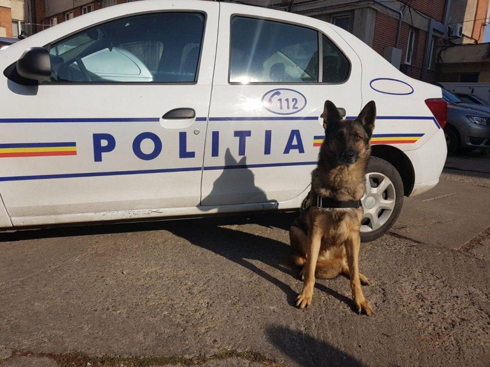 Câinele Pebaf, de la IPJ Arad, a descoperit mii de țigarete netimbrate