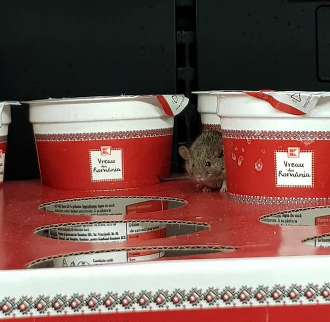 """(VIDEO) Kaufland acuză: Șoarecele a fost """"plantat"""" în magazinul din Arad"""
